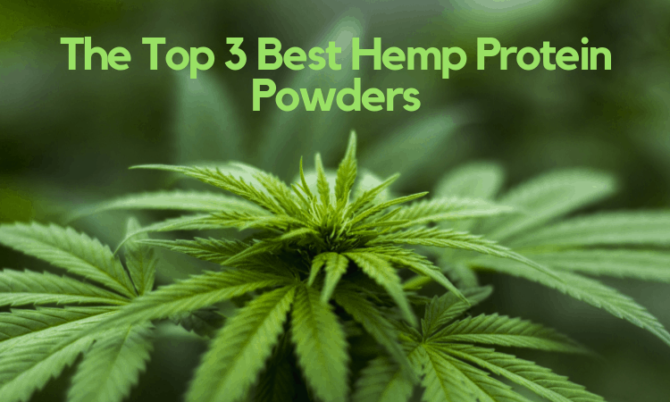 The Top 3 Best Hemp Protein Powders